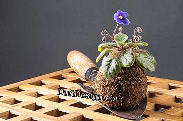 How to make a Kokedama?