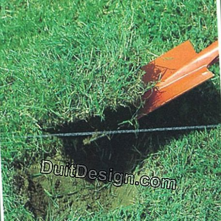 If a rose bush needs to be planted in a lawn, start by moving the lawn; then dig with a spade a hole about 40 cm.