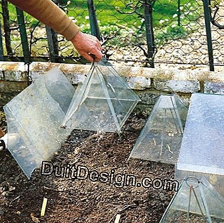 Protection against the cold: garden