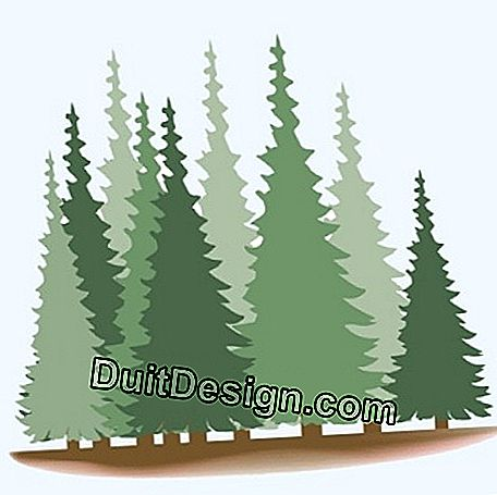 Silhouette of a coniferous forest