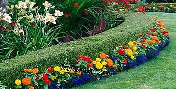 Flowering hedges for a country and natural style