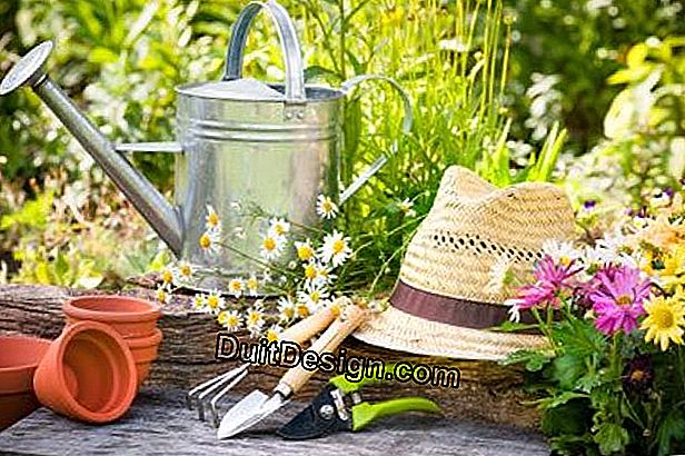Garden: the big spring cleaning