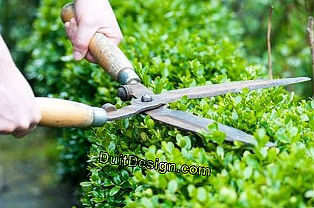 Maintenance of a garden hedge