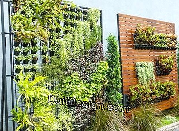 A vertical garden on his balcony