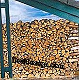 Firewood: good advice