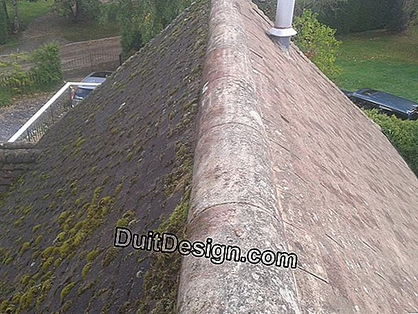 Scam cleaning and roofing treatment