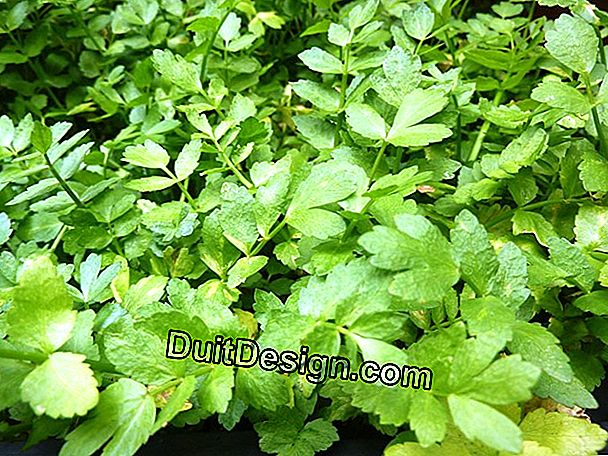 Sow and grow watercress