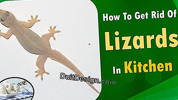 Get rid of lizards