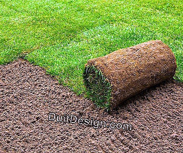 Different varieties of turf