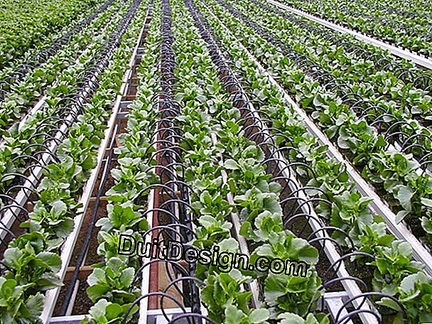 Irrigation systems: micro-irrigation