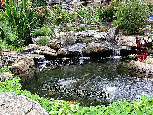 The different forms of garden ponds