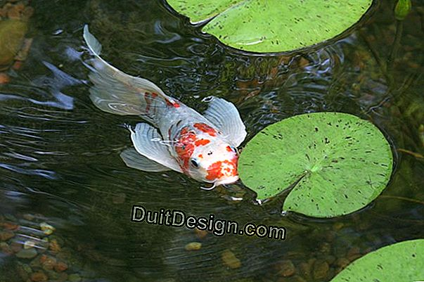 Garden pond for fish