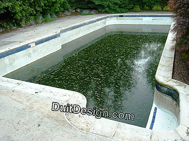 How to eliminate algae in an outdoor pool