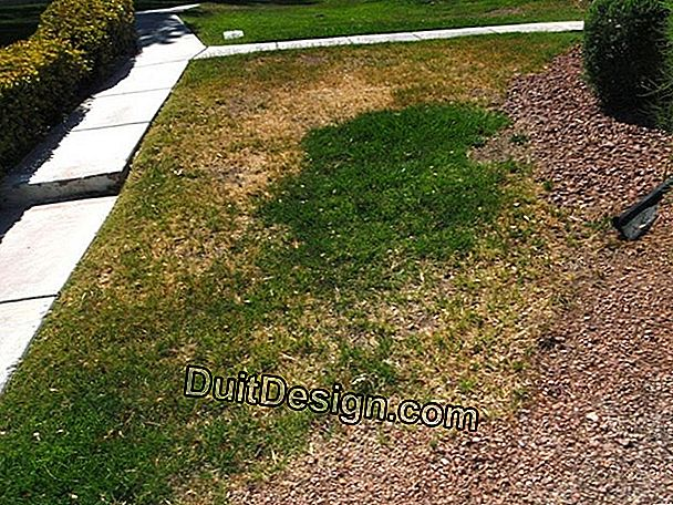 Lawn and drought problem