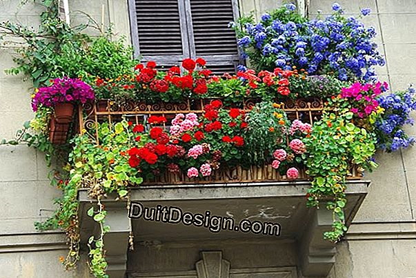 Planters to bloom terraces and window sills