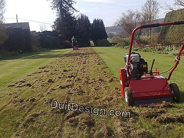 Scarification of a lawn