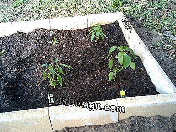 Vegetable garden: soil preparation