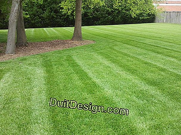 Lawn: a successful mowing