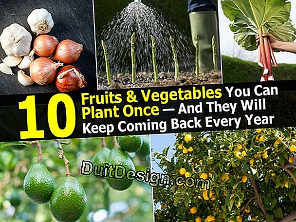 10 Fruits or vegetables to plant in a kitchen