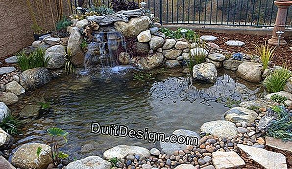 Maintenance of an ornamental pond in the garden