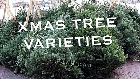 The different species and varieties of Christmas trees