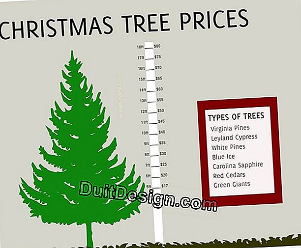 The price of a Christmas tree