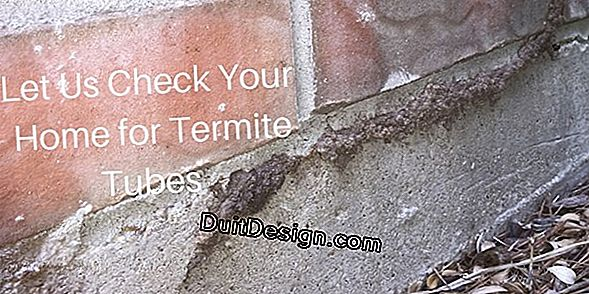 Termites: how to eliminate them or treat the house?