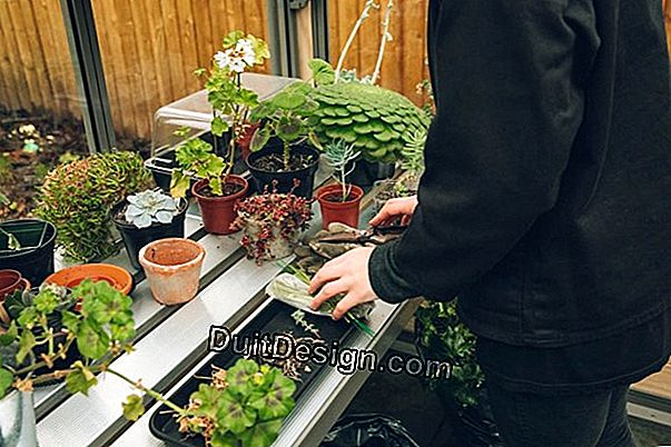 Buy a garden greenhouse