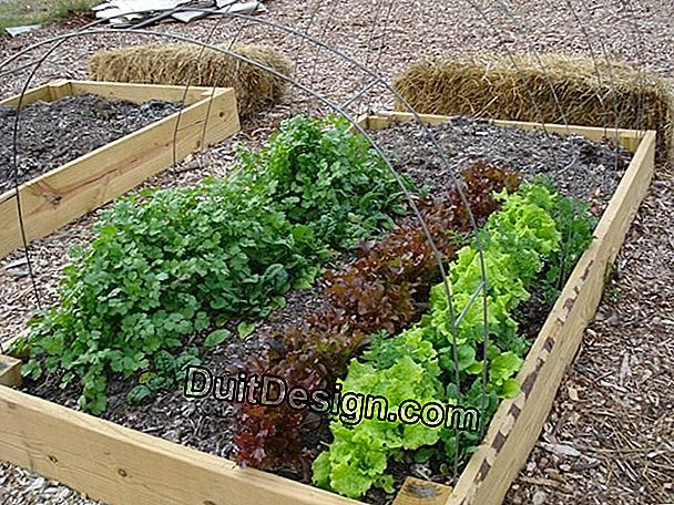 Combine vegetables with vegetable garden