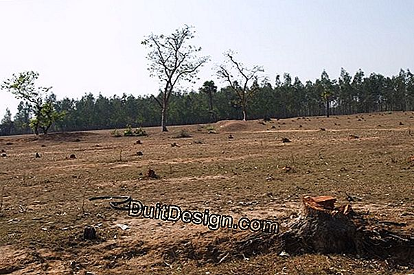 Deforestation of a land