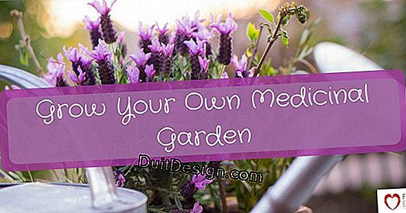 Grow medicinal plants in your garden