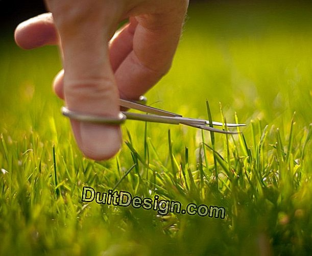 How to maintain a lawn