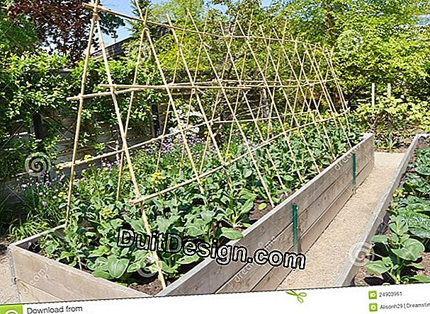 Small kitchen gardens