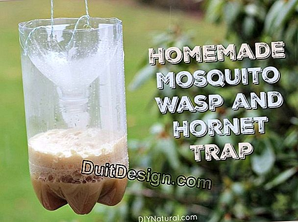 DIY: how to make a mosquito trap