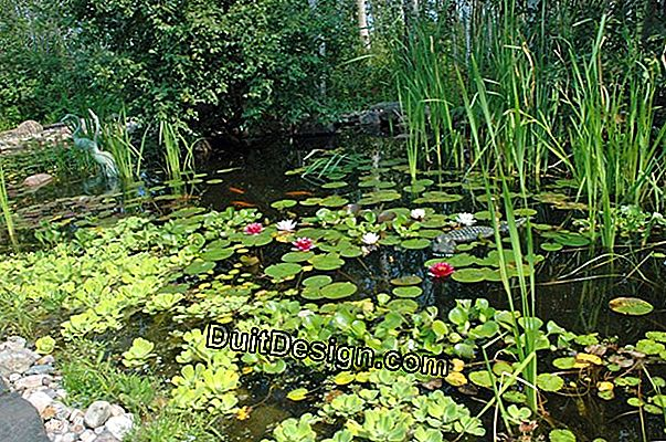 DIY: plants to bloom a pond