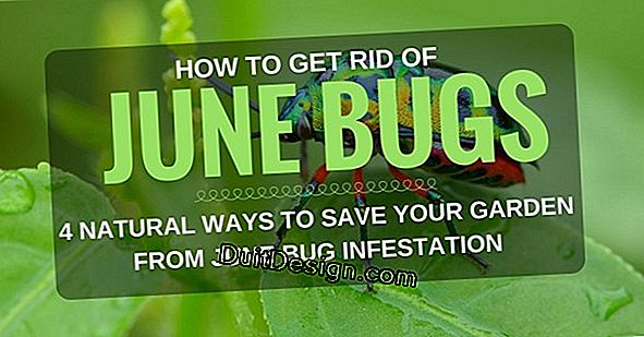 How to get rid of summer bugs