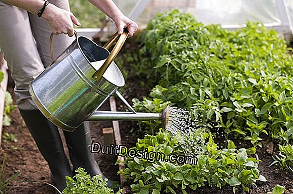 How to water your garden well during the summer
