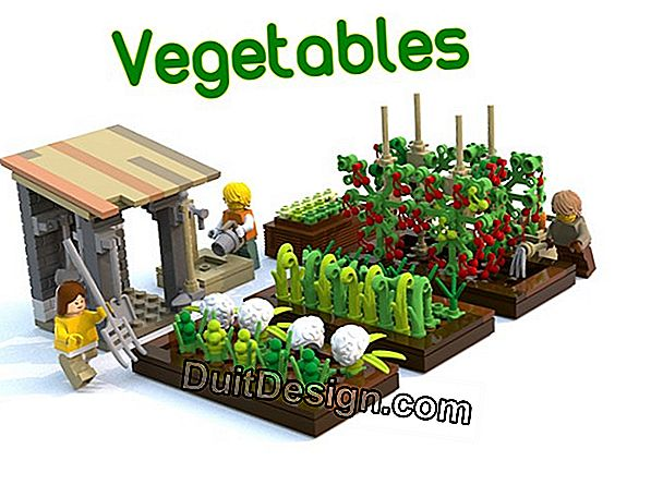 Create a vegetable garden: the project