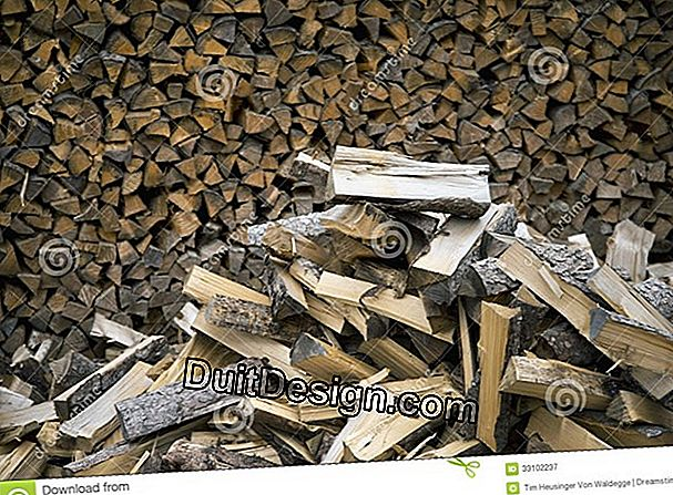 Wood ?: a source of economic and renewable energy