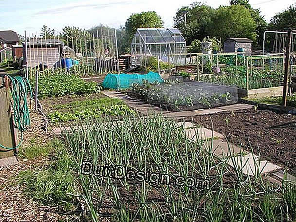 The allotment gardens.