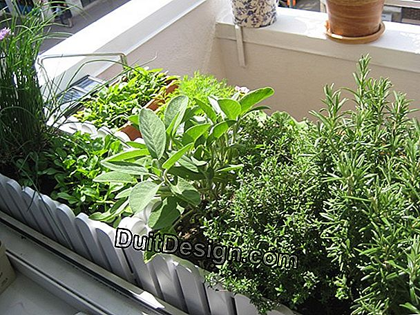 A kitchen garden on the balcony.