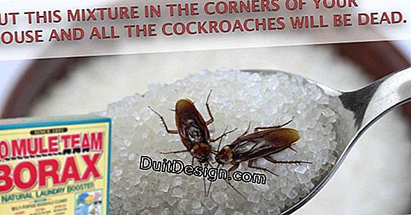 How to get rid of cockroaches definitely