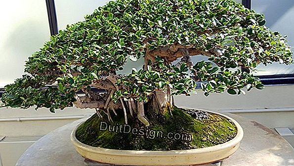 Bonsai kesme