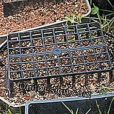 January at the ornamental garden: sowing flowers: ornamental