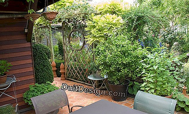 Patio with garden table, trellis and boxwood pot